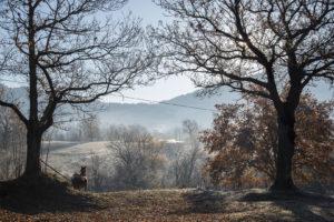 Adriana Gallinella | Loc. Piano dei Campi | Cusano Mutri