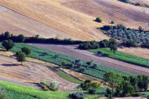 Pasquale Buonopane | Ricami di coltivazioni | Fragneto Monforte
