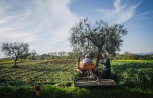 Claudia Delli Gatti | La vita nei campi | Calvi