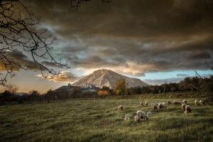Giuseppe Biancardi | Paesaggio Rurale | Montesarchio