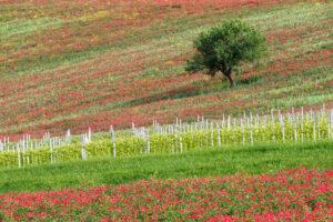 Angelo Masone | Paesaggio impressionista | Benevento