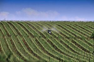 Salvatore Purificato | Geometrie viticole | Apice