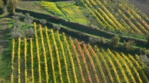 Vincenzo Lago | Diagonale | Solopaca